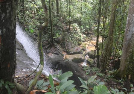 Hutan Belian Pulo Mas