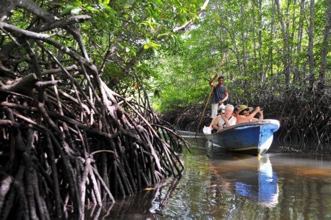 Hutan Mangrove Batu Ampar via Harianinhuaonline - Tempat Wisata Di Kubu Raya