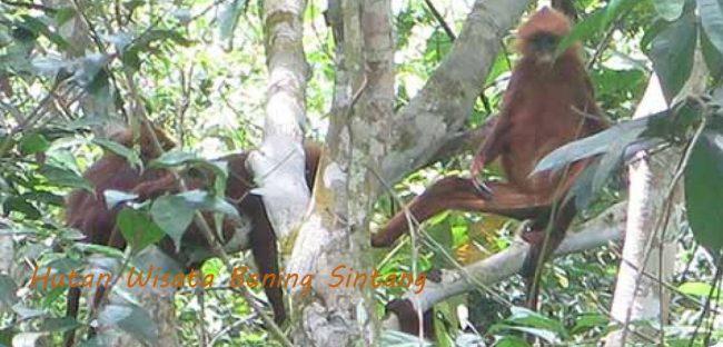 Hutan Wisata Baning