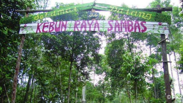 Kebun Raya Sambas via Tribunnews