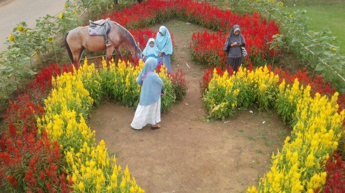Rajati Flower Garden via Tribunnews - Tempat Wisata Di Kubu Raya