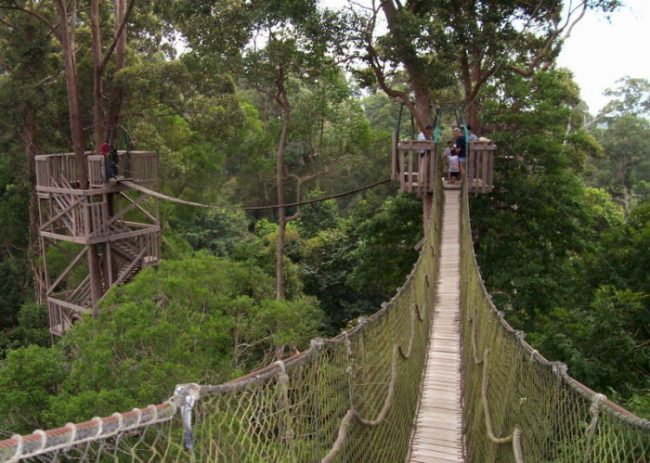 Taman Nasional Bukit Baka via Okezone