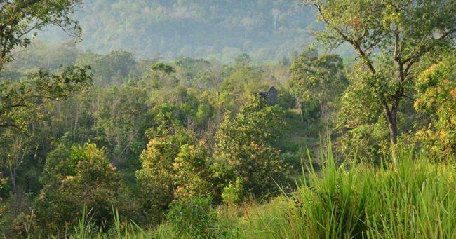 Taman Nasional Bukit Raya Bukit Baka via Menlhkgoid