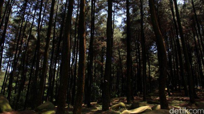 Taman Wisata Alam Gunung Melintang via Detik
