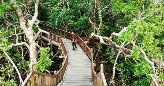 Taman Wisata Mangrove Sukadana via Gpswisataindonesia
