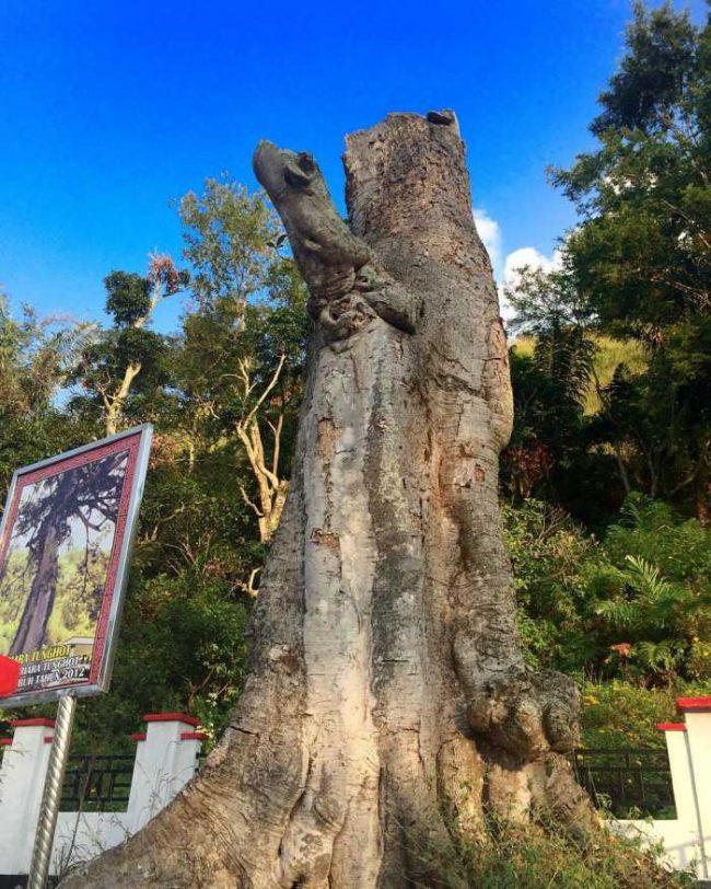 Hariara Tungkot via IG @danielaritonang - tempat wisata di Humbang Hasundutan