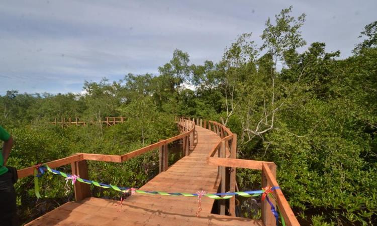 Taman Hutan Mangrove Pariaman via Fb