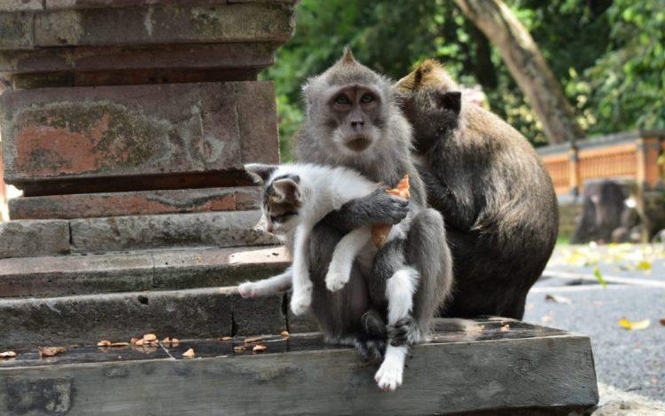 Taman Kera Sekodi via Statusjambi