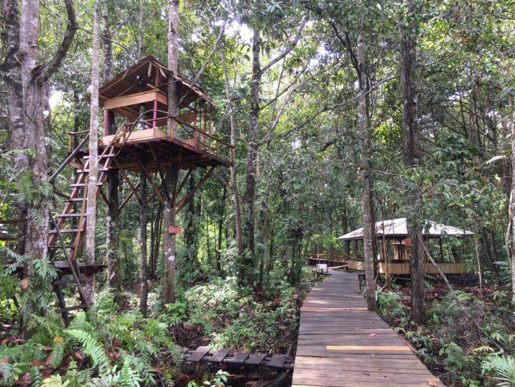 Ekowisata Hutan Desa Berbasis Konservasi via Warsiorid - Tempat Wisata Di Tanjung Jabung Timur