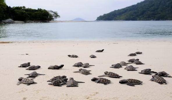 Pulau Durai - tempat wisata di Kepulauan Anambas