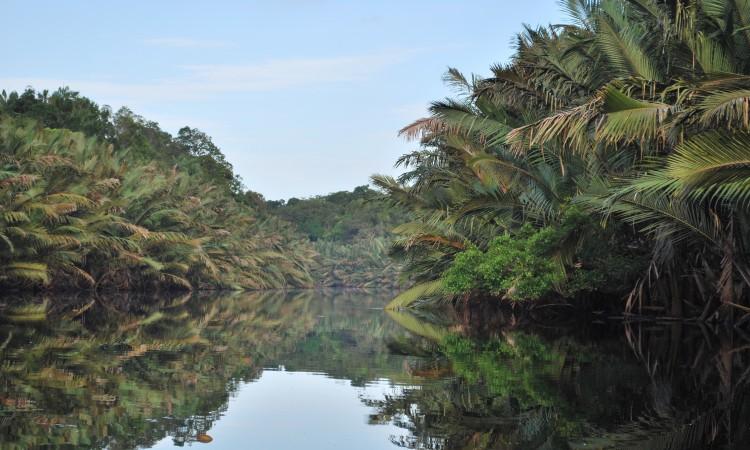 Taman Nasional Berbak via Wikipedia