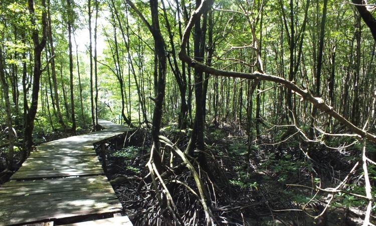 Wisata Cagar Alam Hutan Bakau Pantai Timur via Wonderfuljambi.blogspotcom