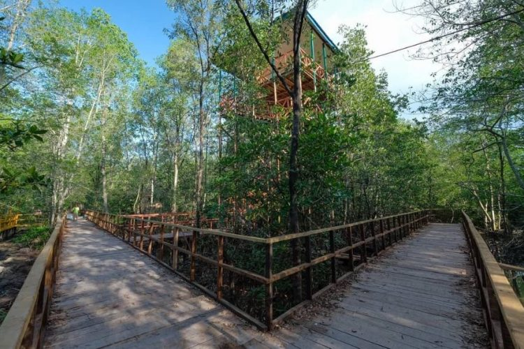 Hutan Mangrove via IG @genpitanjungjabungbarat - Tempat Wisata Di Tanjung Jabung Barat