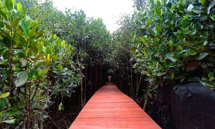 Mangrove Kasih Sayang via Youtube