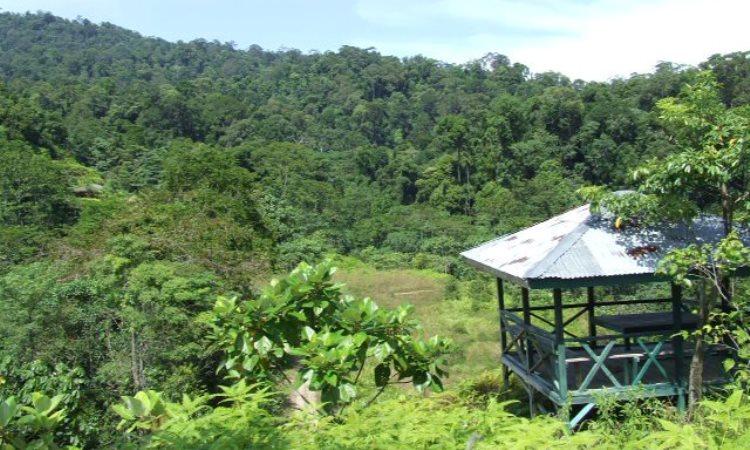 Taman Nasional Bukit 30 via Attayaya - Tempat Wisata Di Tanjung Jabung Barat