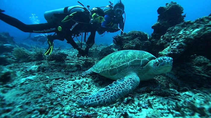 Diving di Pulau Dodola Morotai via Tribunnews