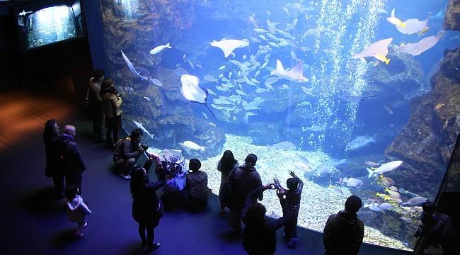 Kyoto Aquarium via Sakurakita - Tempat Wisata di Kyoto