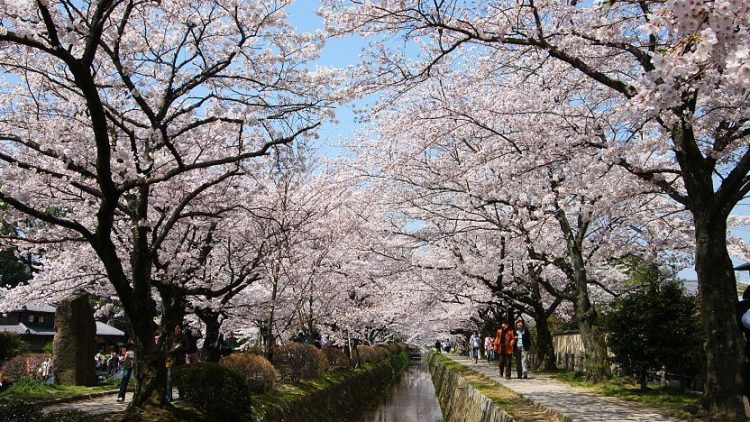 Philosopher's Path Kyoto via Japan Guide