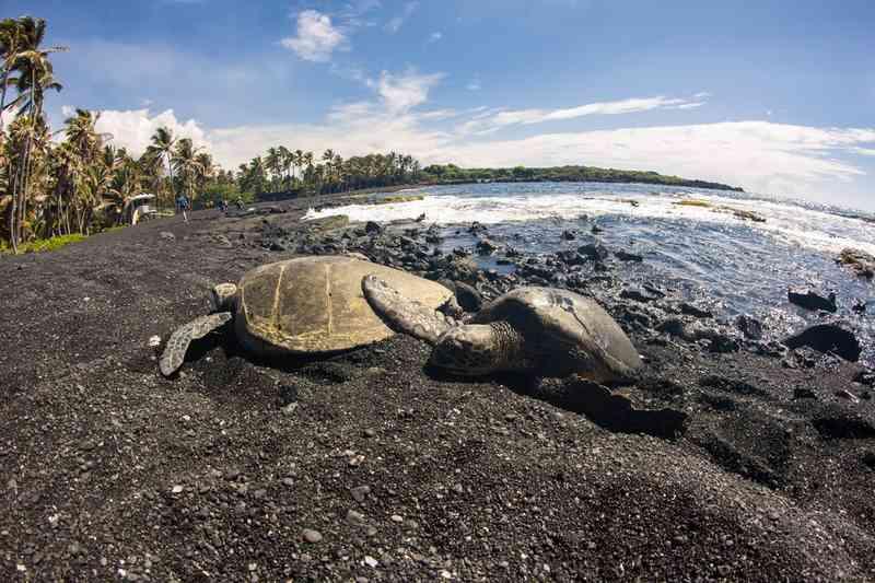 Punalu'u Beach via Shutterstock