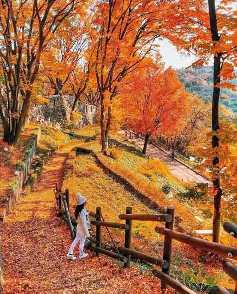Seoul Forest via IG @awescenery