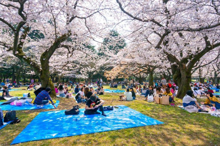 Yoyogi Park via Jrailpass