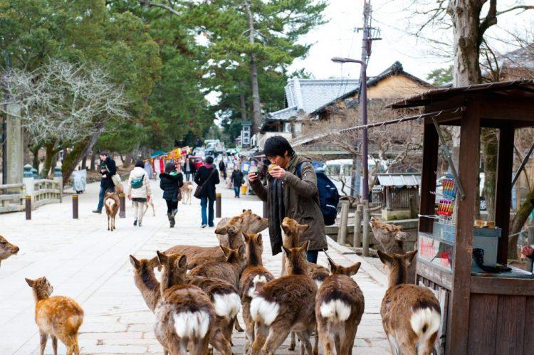 Nara Park via gaijinpot