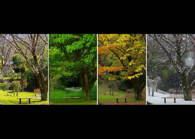 keempat musim di Jepang via Livejapan